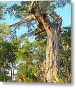 Twirling Tree Path Metal Print
