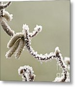 Twisted Frost Metal Print by Anne Gilbert
