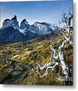 Twisted Tree And Trail Metal Print