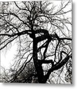 Twisted Tree In Black And White Metal Print