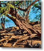 Twisting Trees Metal Print