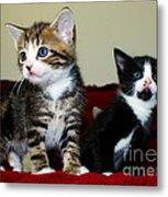 Two Adorable Kittens Metal Print