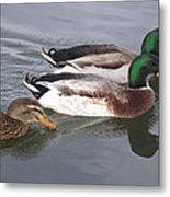 Two-and-a-half Ducks Metal Print