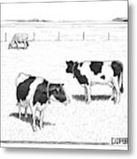 Two Spotted Cows Looking At A Jersey Cow Metal Print