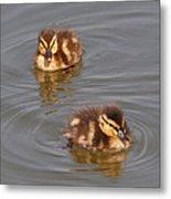 Two Baby Ducklings Metal Print