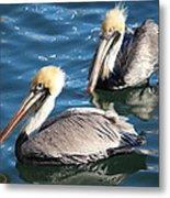 Two Beautiful Pelicans Metal Print