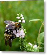 Two Bees On Flower Metal Print