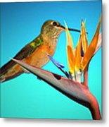 Two Birds Of Paradise Metal Print