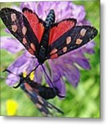 Two Black And Red Butterflies Metal Print