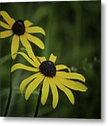 Two Black Eyes On The Macomb Orchard Trails Metal Print