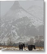 Two Black Horses In The Snow   #7983 Metal Print