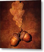 Two Brown Acorns Metal Print