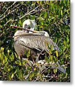 Two Brown Pelicans Metal Print