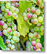 Two Bunches Metal Print