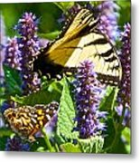 Two Butterflies In The Afternoon Sun Metal Print