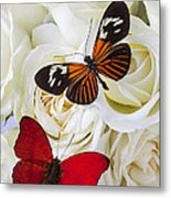 Two Butterflies On White Roses Metal Print