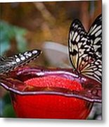 Two Butterflys Metal Print
