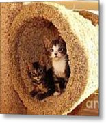Two Cats In A Condo Metal Print