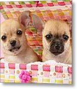 Two Chihuahuas Metal Print by Greg Cuddiford