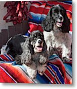 Two Cocker Spaniels Together Metal Print