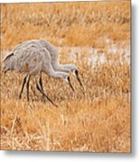 Two Cranes In The Field Metal Print