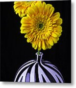 Two Daises In Striped Vase Metal Print