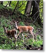 Two Deer Metal Print