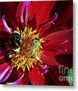 Two Different Bees Sharing  Metal Print
