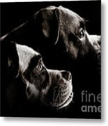 Two Dogs Metal Print