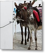 Two Donkeys Tethered In The Street In Metal Print