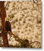 Two Eagles Hanging Out In Their Nest Metal Print