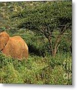 Two Elephants Walking Through The Grass Metal Print