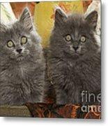 Two Fluffy Kittens Metal Print