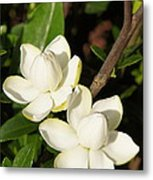 Awesome Blossoms Metal Print
