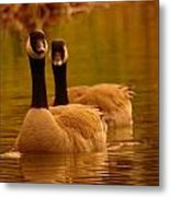 Two Geese In A Line Metal Print