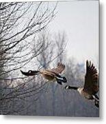 Two Geese In Flight Metal Print