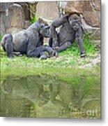 Two Gorillas Relaxing II Metal Print