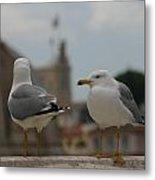 Two Gulls Metal Print
