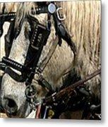 Two Horse Power Metal Print