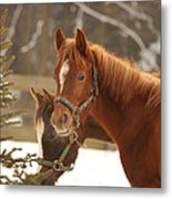 Two Horses In Winter Day Metal Print