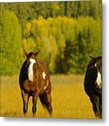 Two Horses Walking Along Metal Print