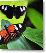 Two In The Leaves Metal Print