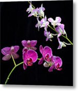 Two Kind Of Orchid Flower Metal Print