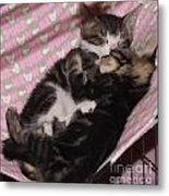 Two Kittens Sleeping Metal Print