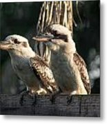 two Kookaburra Metal Print