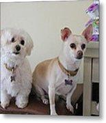 Two Little Dog Metal Print