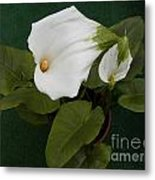 Two Lovely Lilies Metal Print