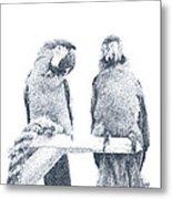 Two Macaws Metal Print