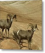 Two Male Rams At Zion Metal Print