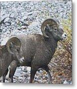 Two Male Rams Metal Print